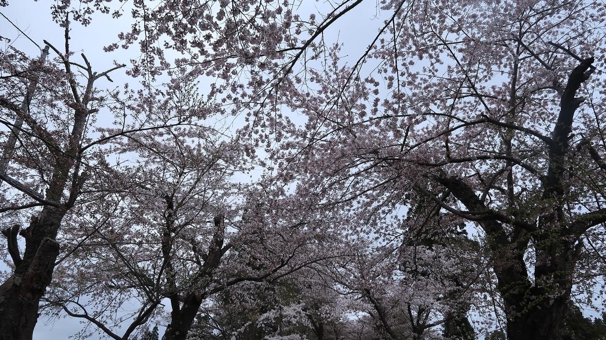 f:id:shirokumapanda:20210418235410j:plain