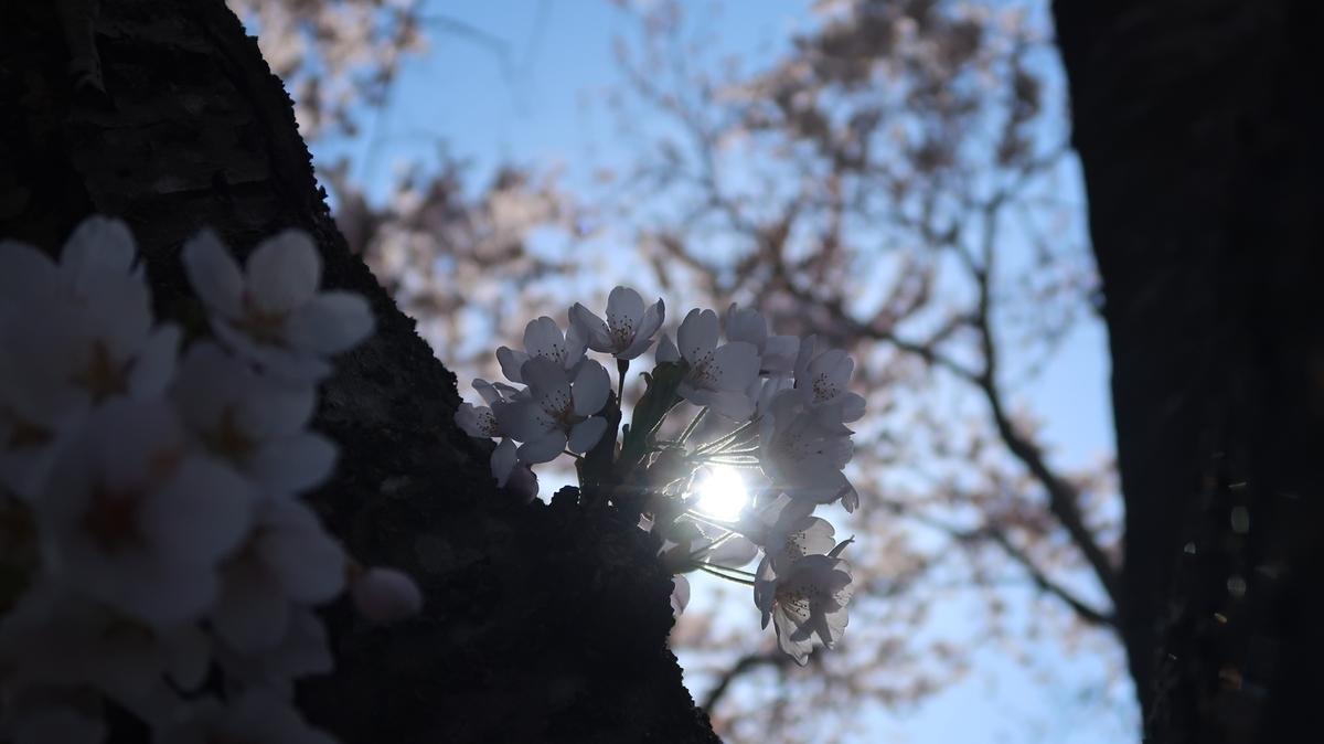 f:id:shirokumapanda:20210426230150j:plain
