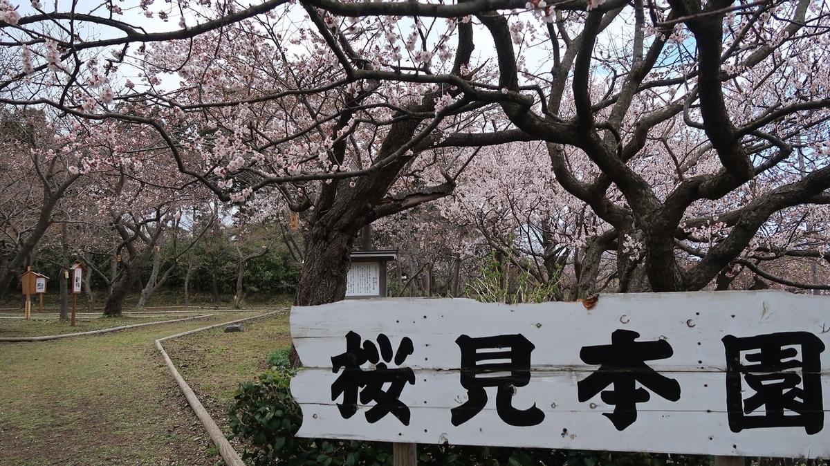 f:id:shirokumapanda:20210509220735j:plain