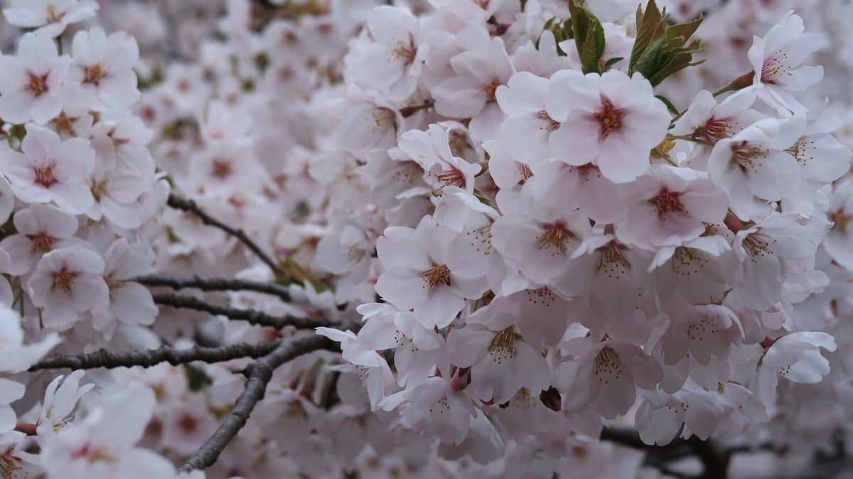 f:id:shirokumapanda:20210509221014j:plain
