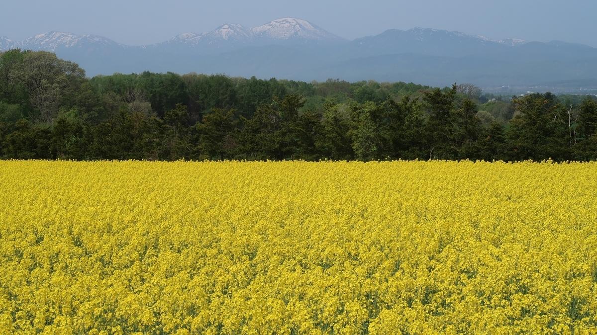 f:id:shirokumapanda:20210601224641j:plain