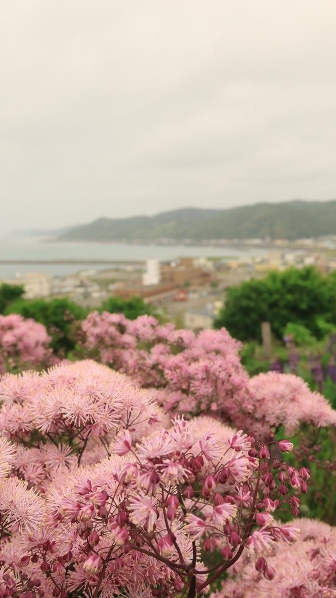 f:id:shirokumapanda:20210712023419j:plain