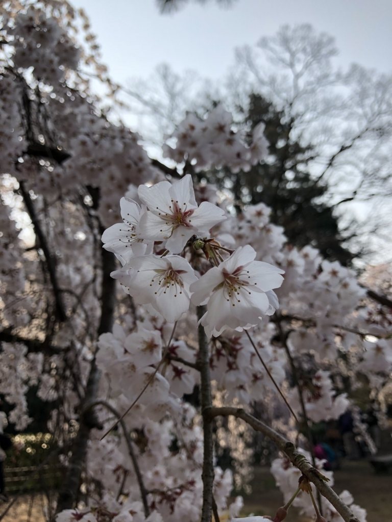 f:id:shirokumapunch:20180330145722j:plain