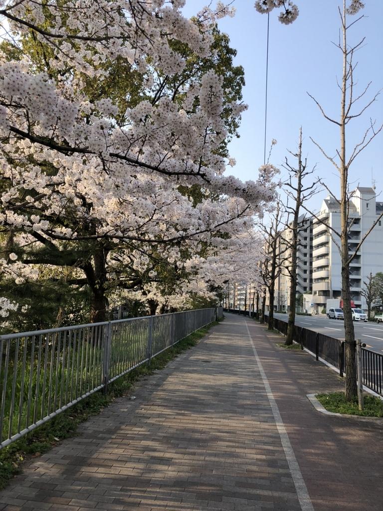 f:id:shirokumapunch:20180330150031j:plain