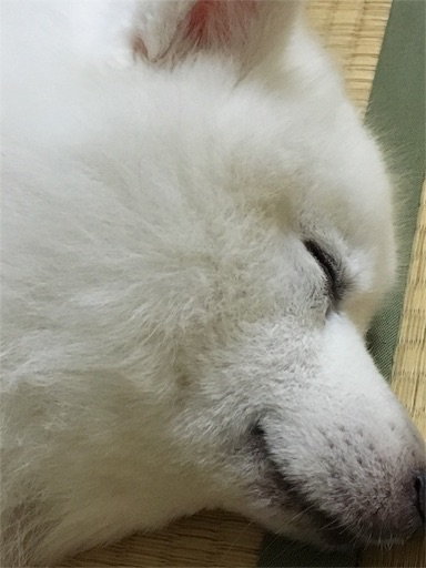 f:id:shirokun0806:20160906105224j:image