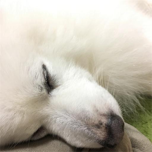 f:id:shirokun0806:20161217212635j:image