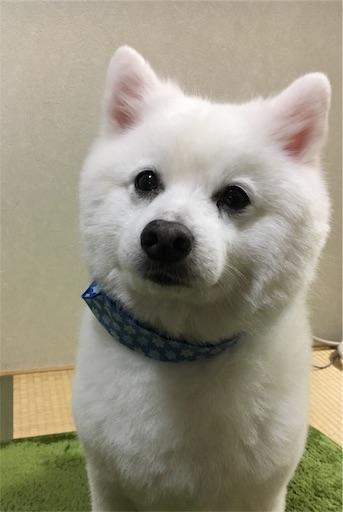 f:id:shirokun0806:20170208204414j:image