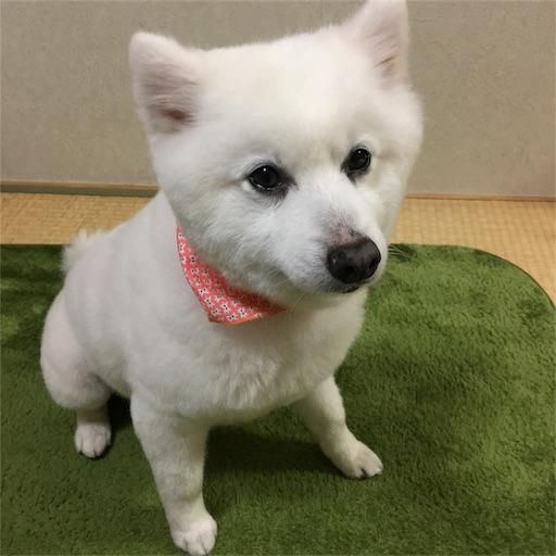 f:id:shirokun0806:20170423145926j:image
