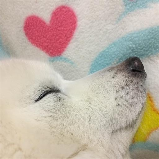 f:id:shirokun0806:20170512230150j:image