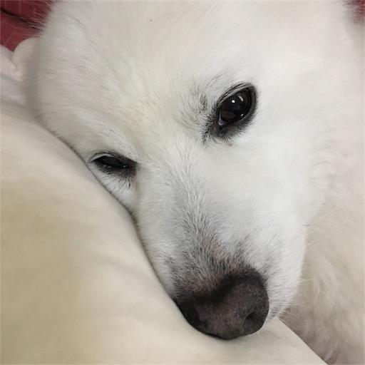 f:id:shirokun0806:20170521223450j:image