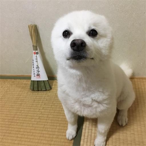 f:id:shirokun0806:20170716175434j:image