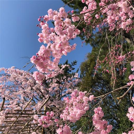 f:id:shirokun0806:20180330201459j:image