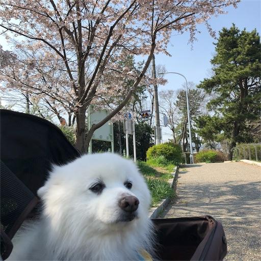 f:id:shirokun0806:20180330201620j:image
