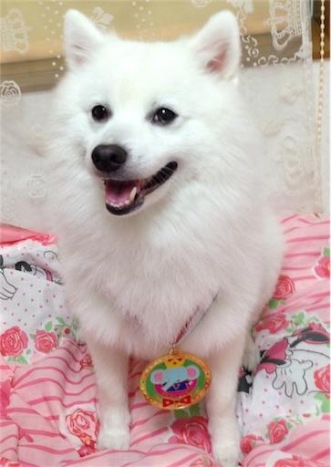 f:id:shirokun0806:20180704211923j:image