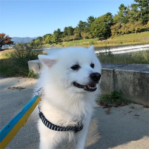 f:id:shirokun0806:20181017094832j:image