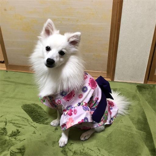 f:id:shirokun0806:20190101151735j:image