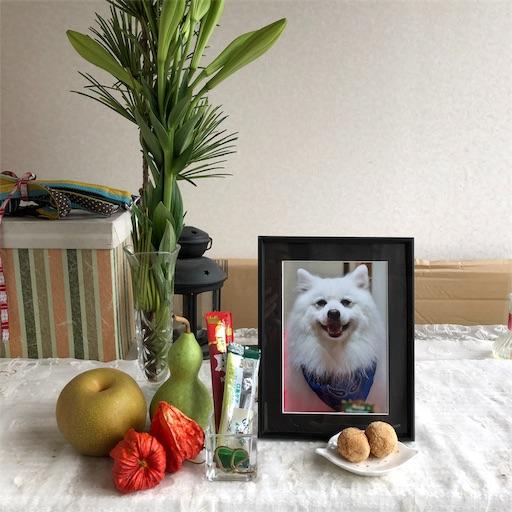 f:id:shirokun0806:20190816220044j:image