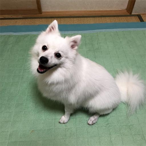 f:id:shirokun0806:20190831224616j:image