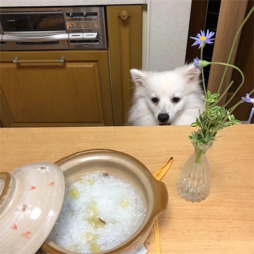 f:id:shirokun0806:20190917123315j:image