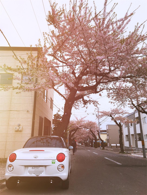 f:id:shiromaru1224:20180502213346j:image