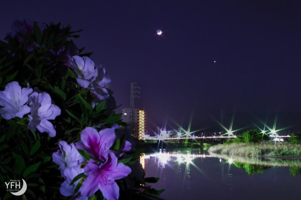 f:id:shironagassu:20190109205424j:plain