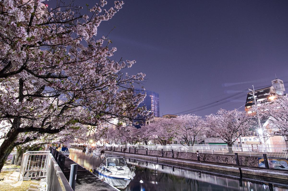 f:id:shironagassu:20200224223837j:plain
