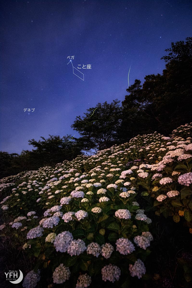 f:id:shironagassu:20200615182139j:plain