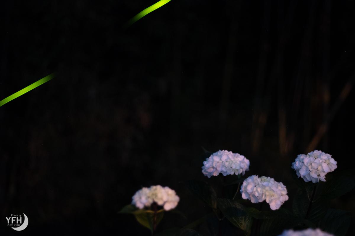 f:id:shironagassu:20200615182414j:plain