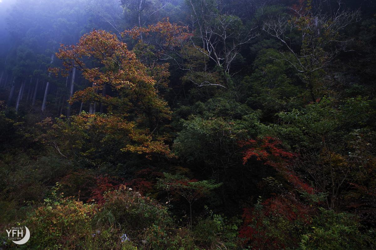 f:id:shironagassu:20201123191900j:plain