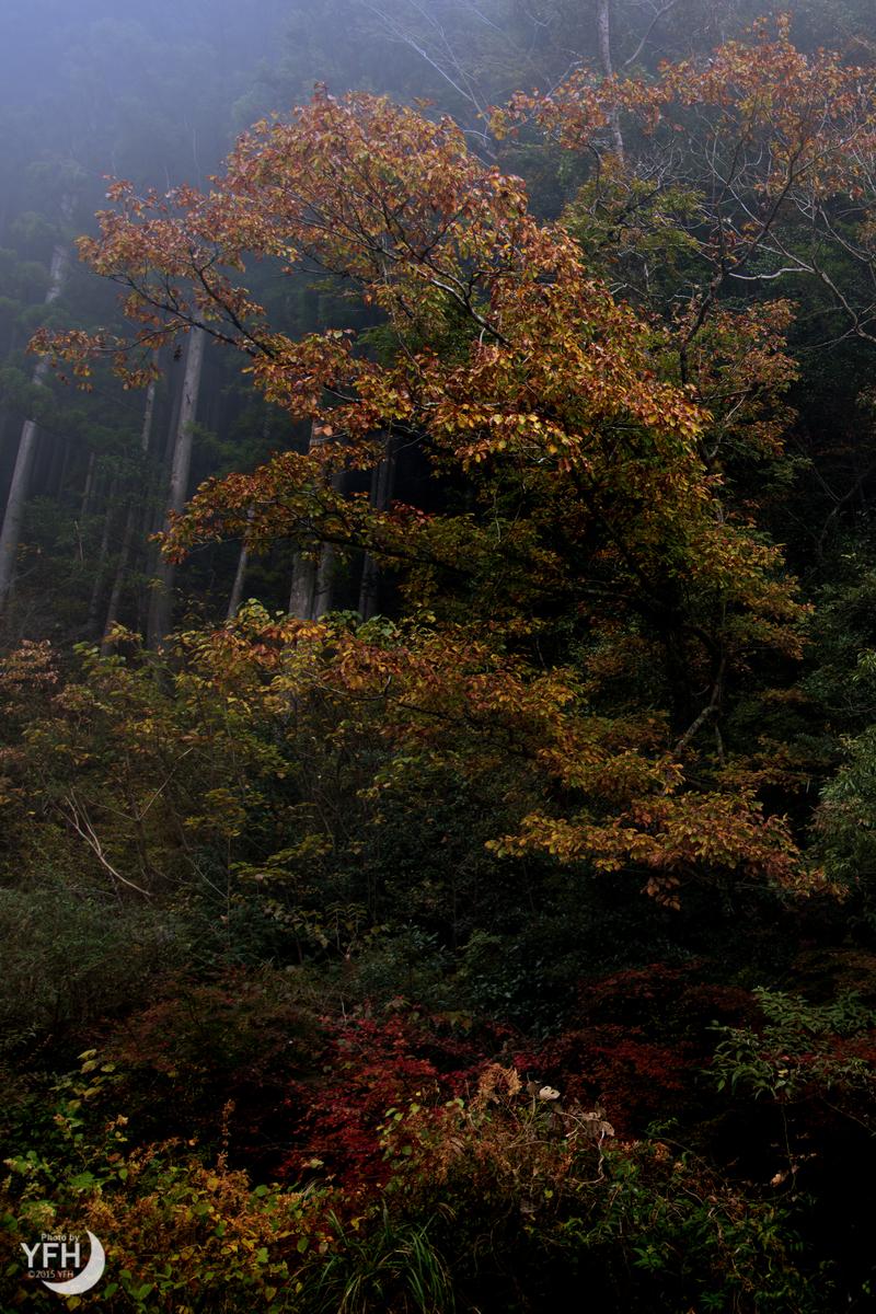 f:id:shironagassu:20210614203554j:plain