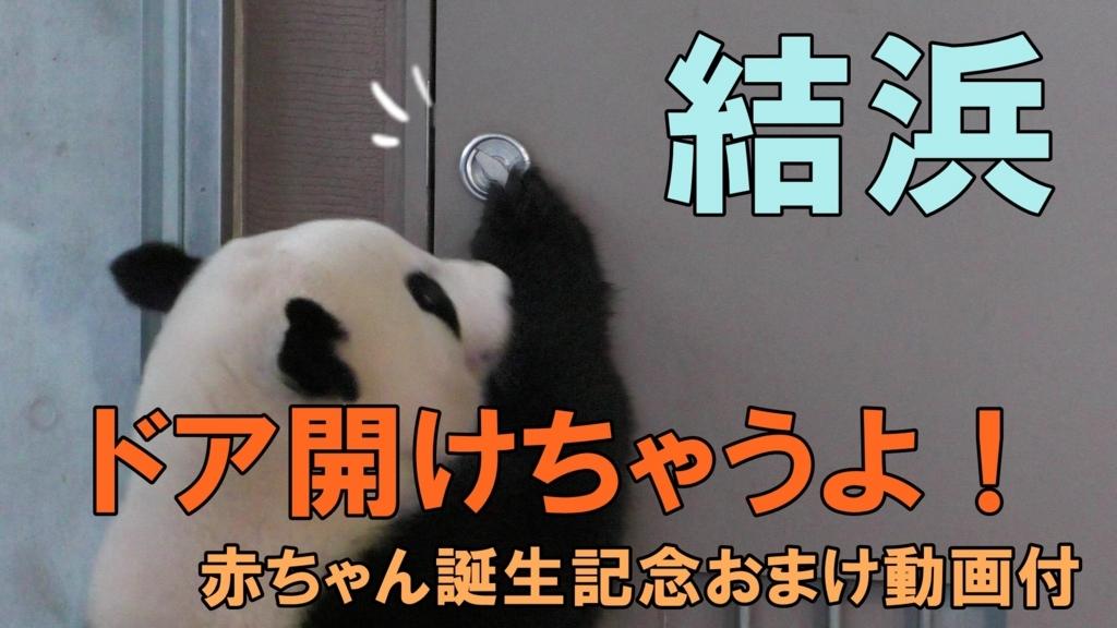 f:id:shironekomii:20180818010425j:plain