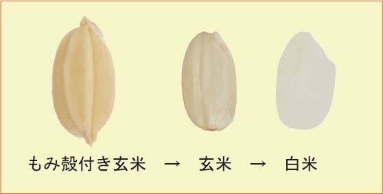 f:id:shirotofarm:20150518014707j:plain