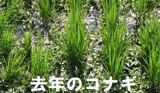 f:id:shirotofarm:20170702185351p:plain