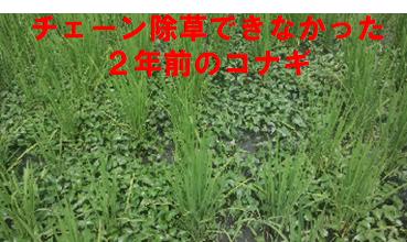 f:id:shirotofarm:20200724183219p:plain