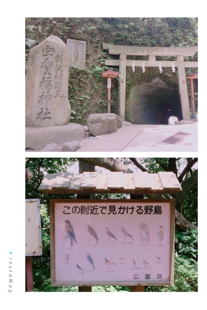 f:id:shirotomidori:20170626003838j:image