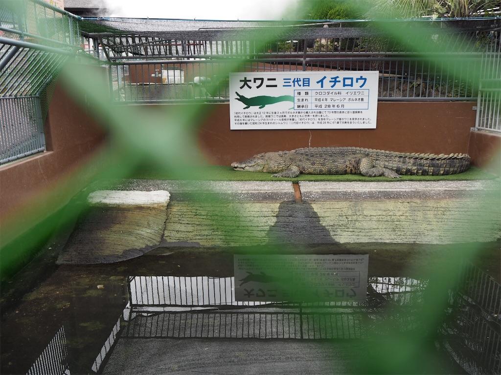 f:id:shirotomidori:20171019074916j:image