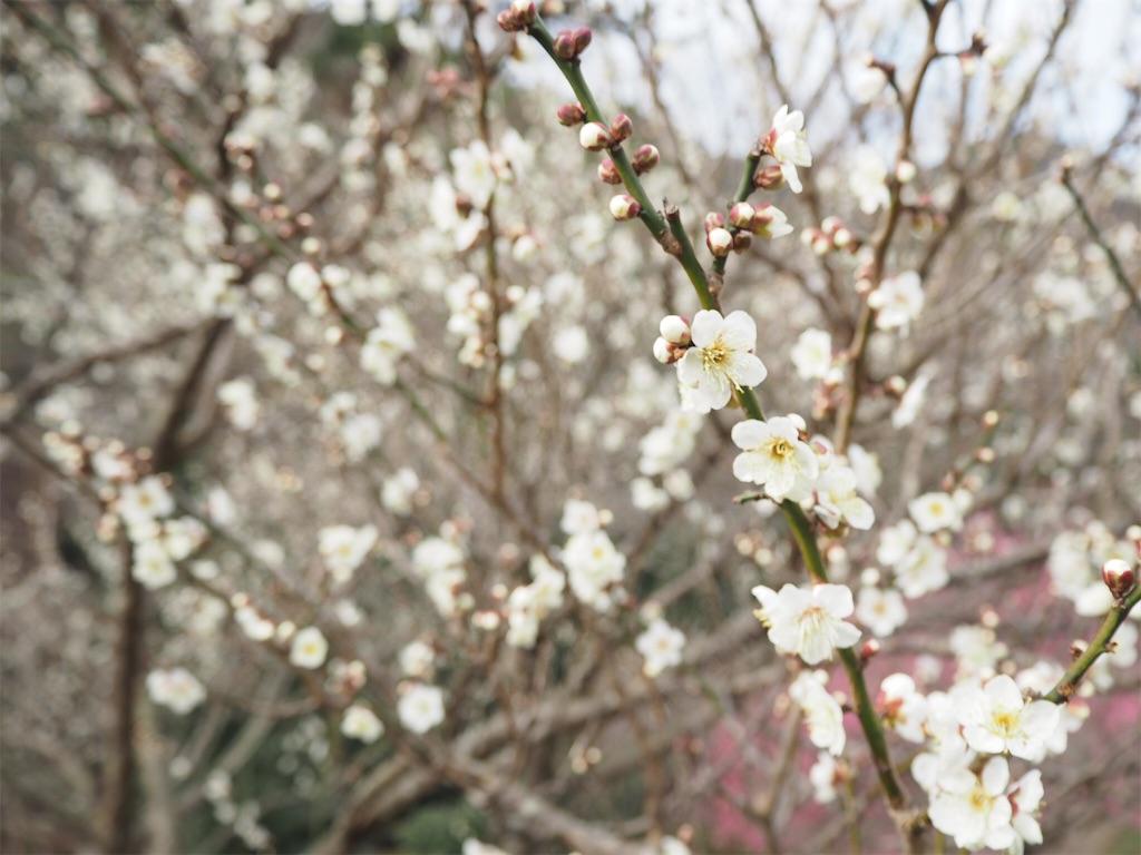 f:id:shirotomidori:20190205001438j:image