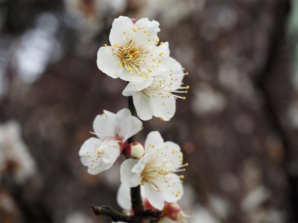 f:id:shirotomidori:20190205001503j:image