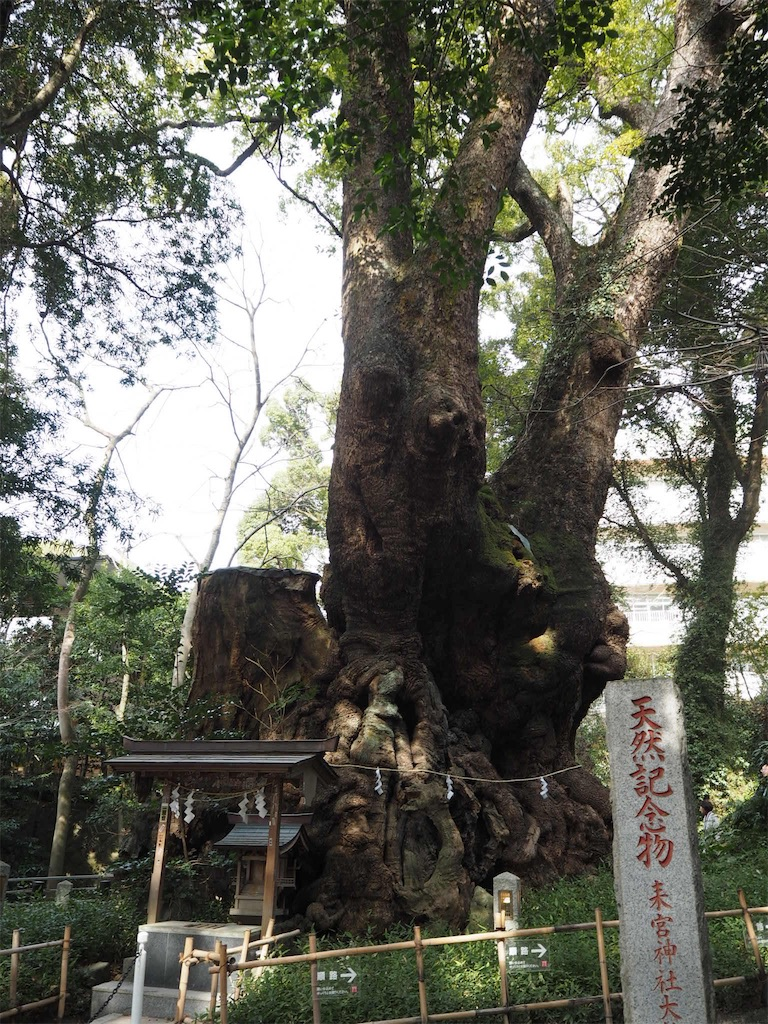 f:id:shirotomidori:20190205001912j:image