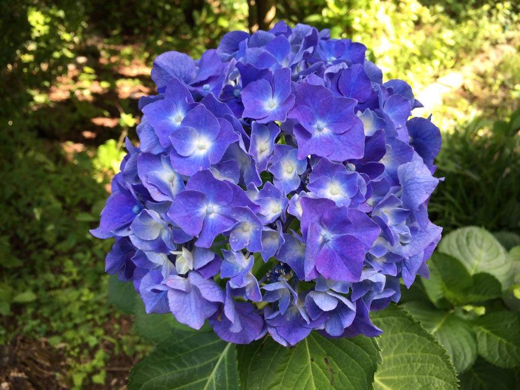 f:id:shirotonakama:20160627212755j:image