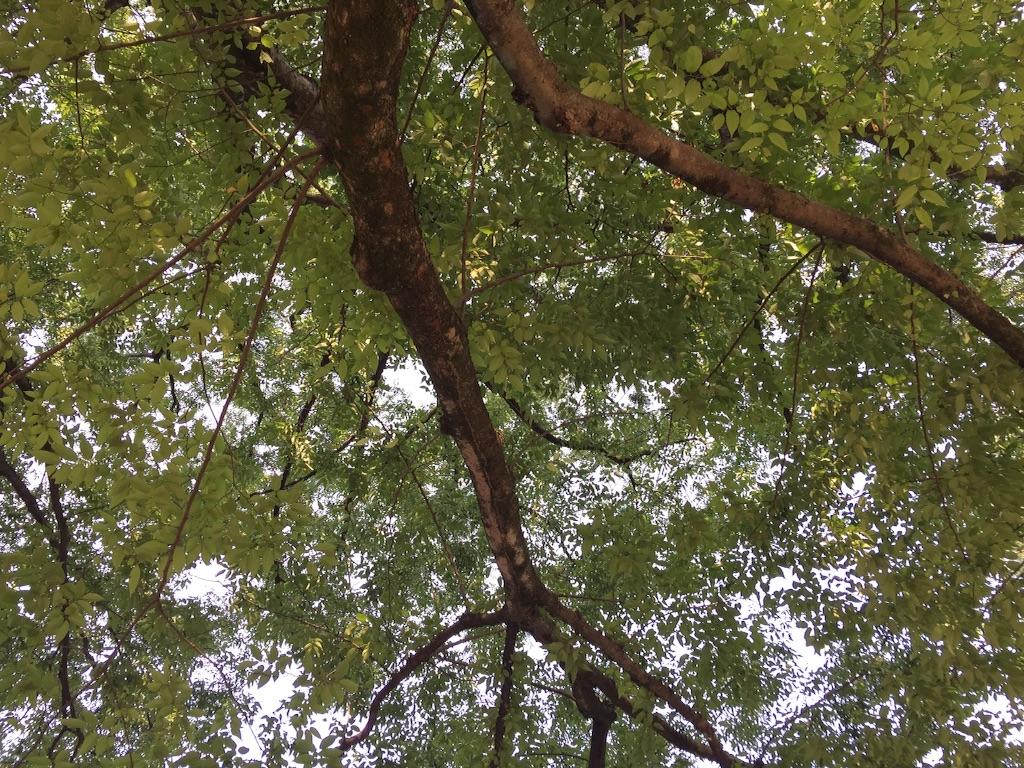 f:id:shirotonakama:20160722191724j:image