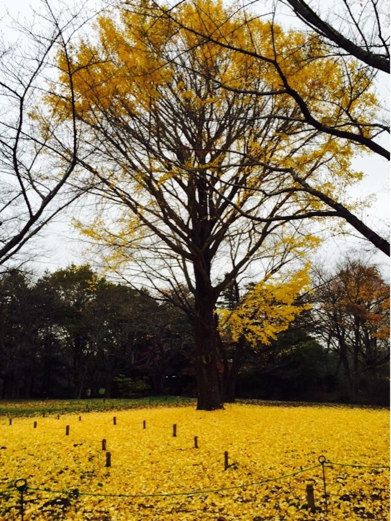 f:id:shirotonakama:20161124211223j:image