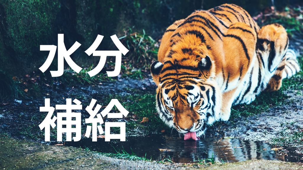 f:id:shirouto-runner:20190215154753j:plain