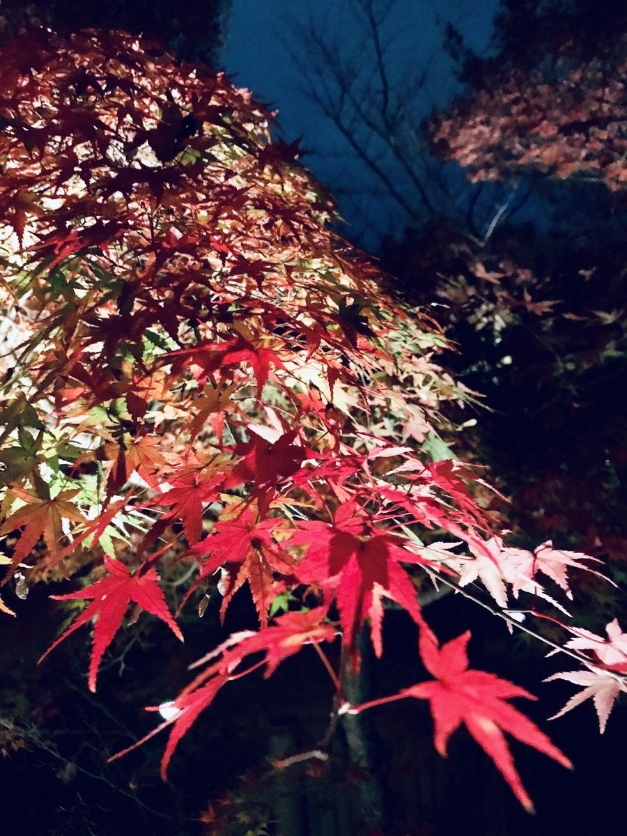 紅葉, ライトアップ