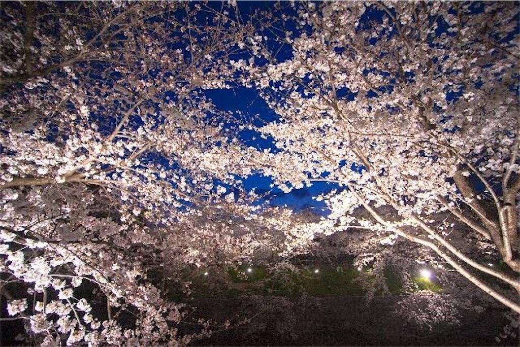 f:id:shiroxatou:20201121001324j:image