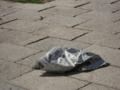 [東千田公園]風にあおられ飛ばされる新聞紙
