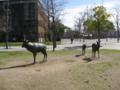 [東千田公園]鹿のオブジェと旧広島大学理学部1号館