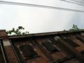 [旧広島陸軍被服支廠]東西方向の棟 樋に茂る植物・酸化した鉄扉