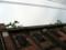 東西方向の棟 樋に茂る植物・酸化した鉄扉