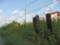 旧国鉄宇品線 跡地の花々